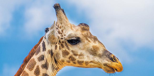 18 Days Tanzania Safaris