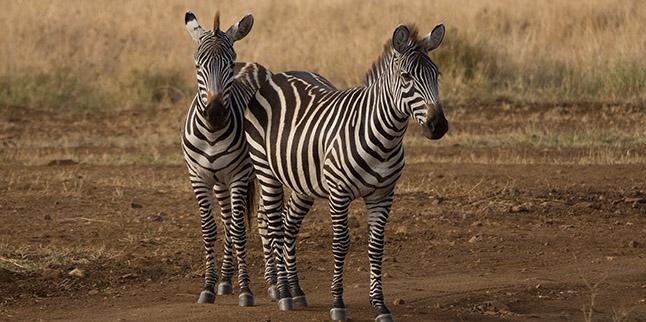 7 Days Northern Tanzania