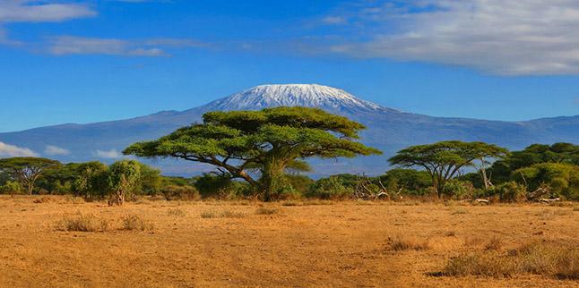 Kilimanjaor-safaris